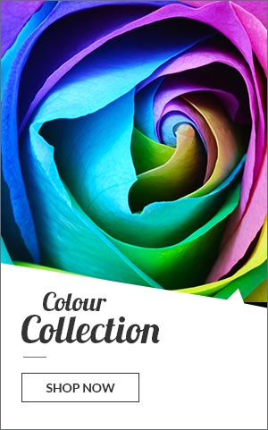 Colour Art Collection