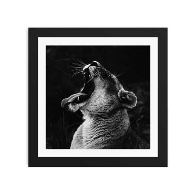 Lioness Black And White Black Framed Wall Art Print