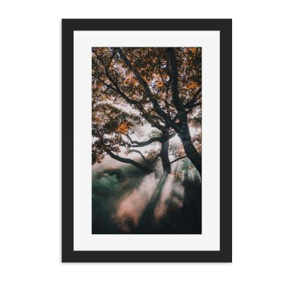 Forrest Ray Wall Art Print